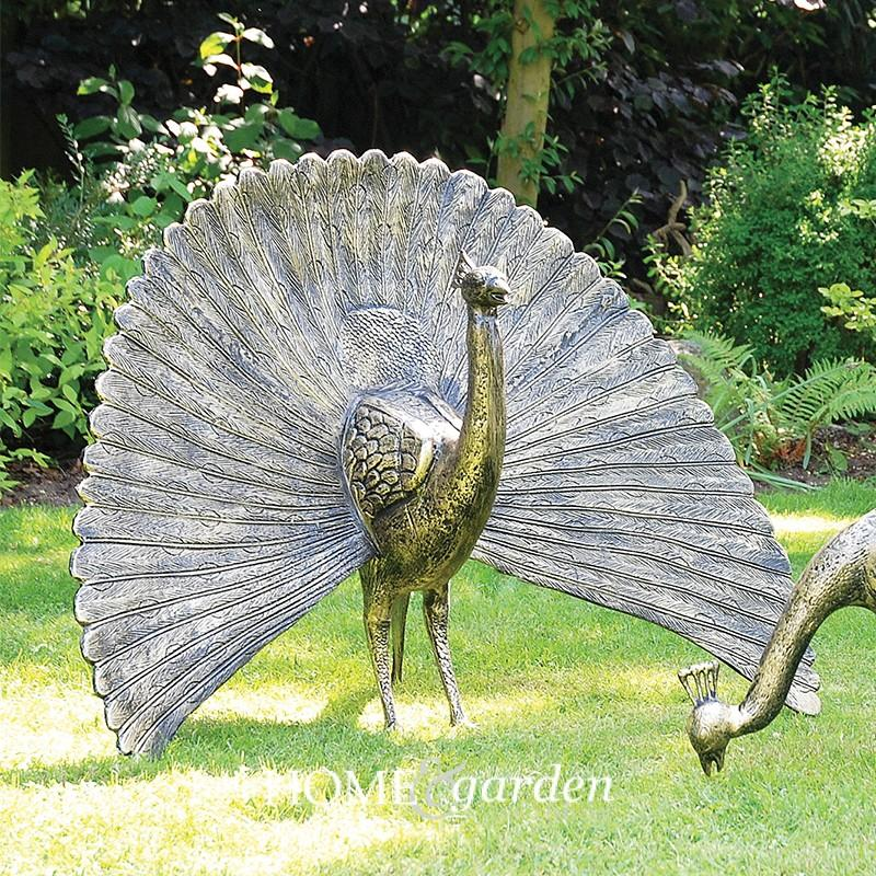 peacockheadupcrop